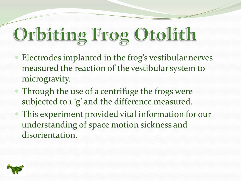 Electrodes implanted in the frog's vestibular nerves measured the reaction of the vestibular system to microgravity.
