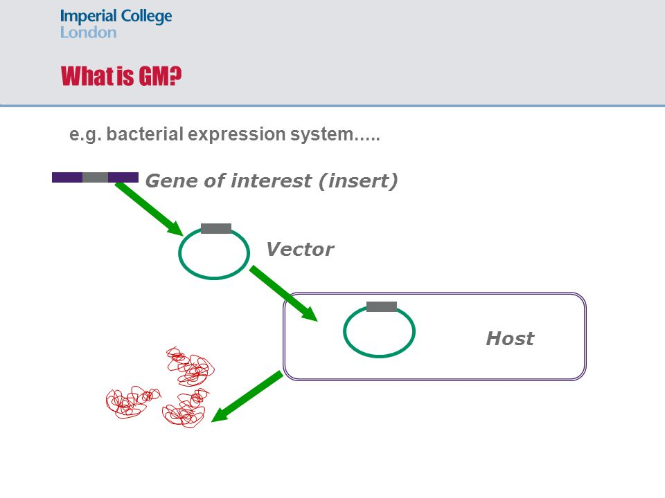 What is GM Gene of interest (insert) Vector Host e.g. bacterial expression system.....
