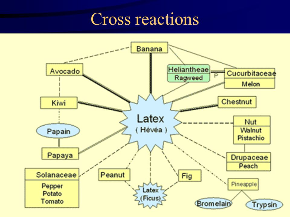 Cross reactions Latex is derived from a plant - Related to other plants !