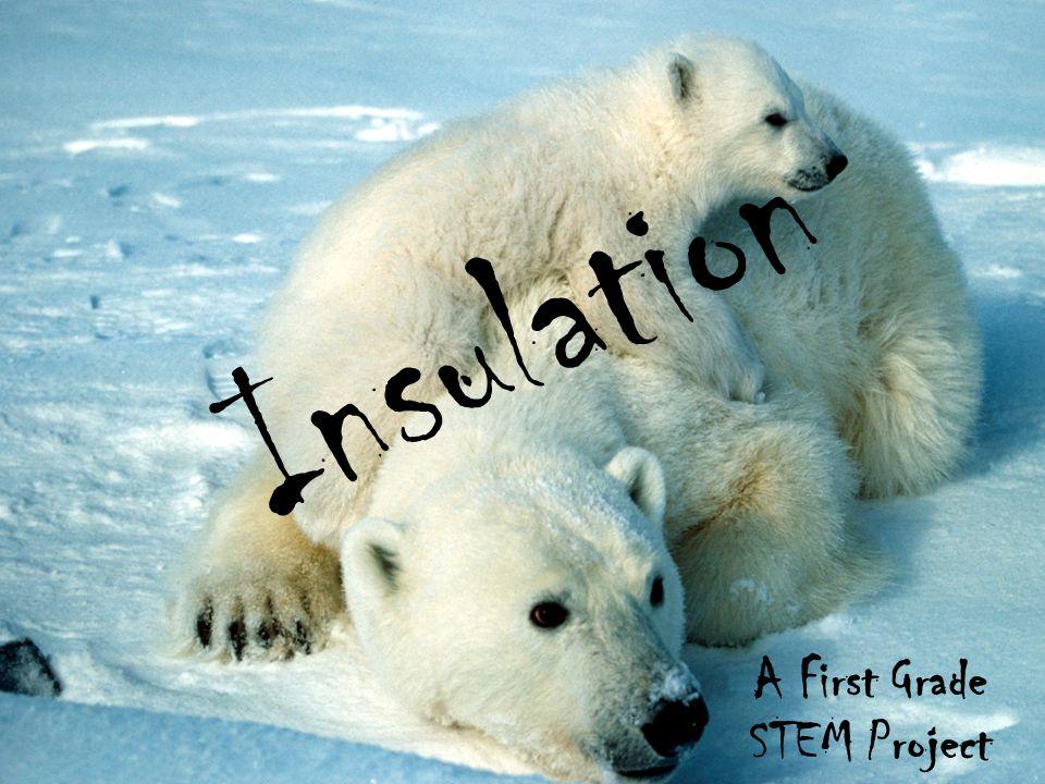 Insulation A First Grade STEM Project