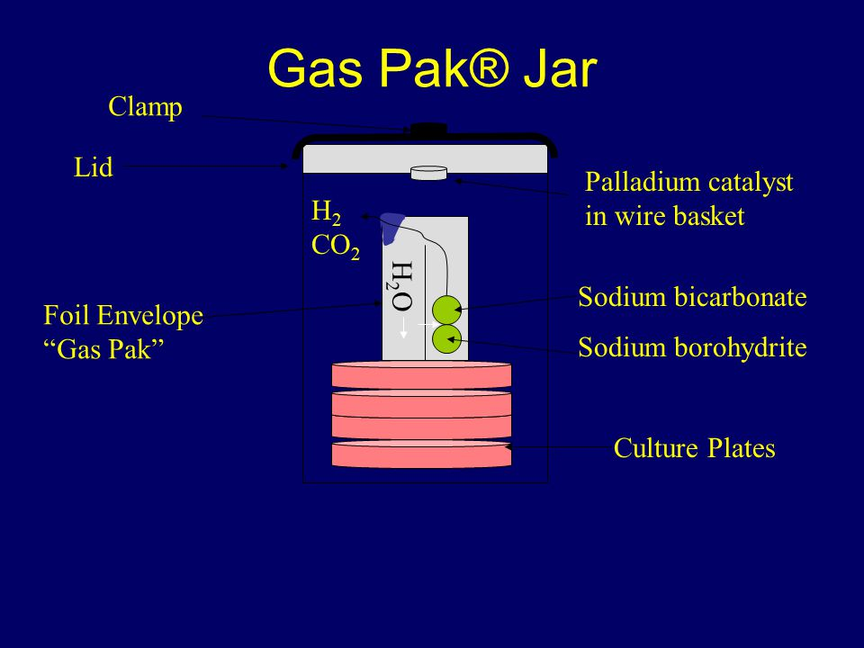 Gas Pak® Jar H2OH2O H 2 CO 2 Sodium borohydrite Sodium bicarbonate Palladium catalyst in wire basket Foil Envelope Gas Pak Culture Plates Clamp Lid
