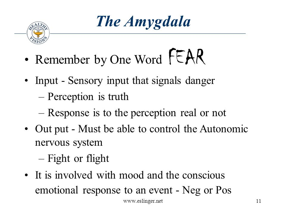 www.eslinger.net11 The Amygdala Remember by One Word FEAR Input - Sensory input that signals danger –Perception is truth –Response is to the perception real or not Out put - Must be able to control the Autonomic nervous system –Fight or flight It is involved with mood and the conscious emotional response to an event - Neg or Pos