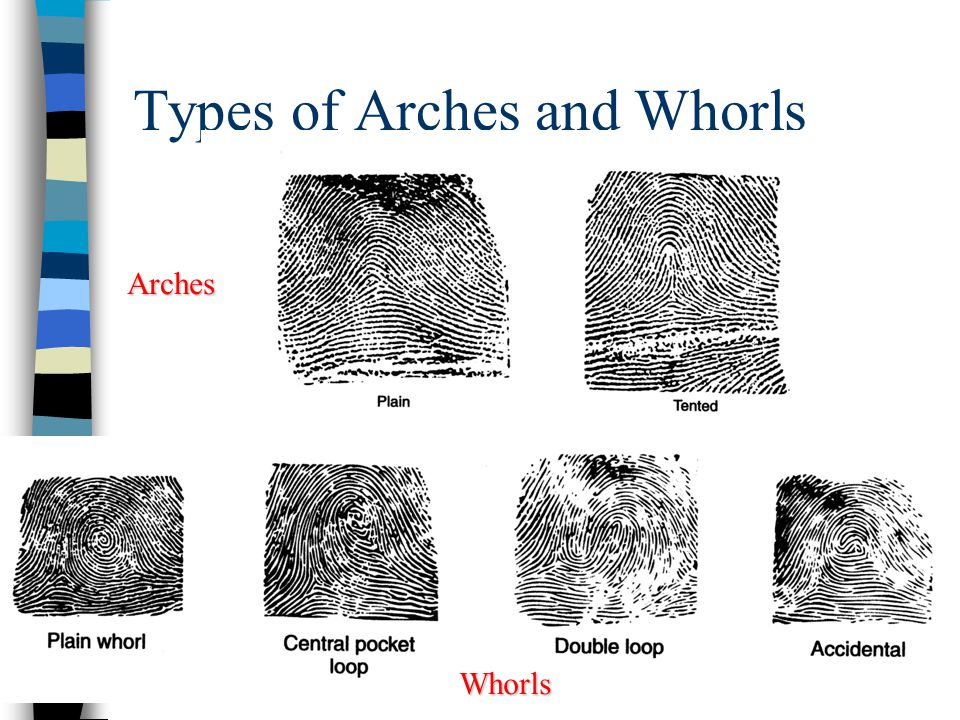 11 Forensic Fingerprints
