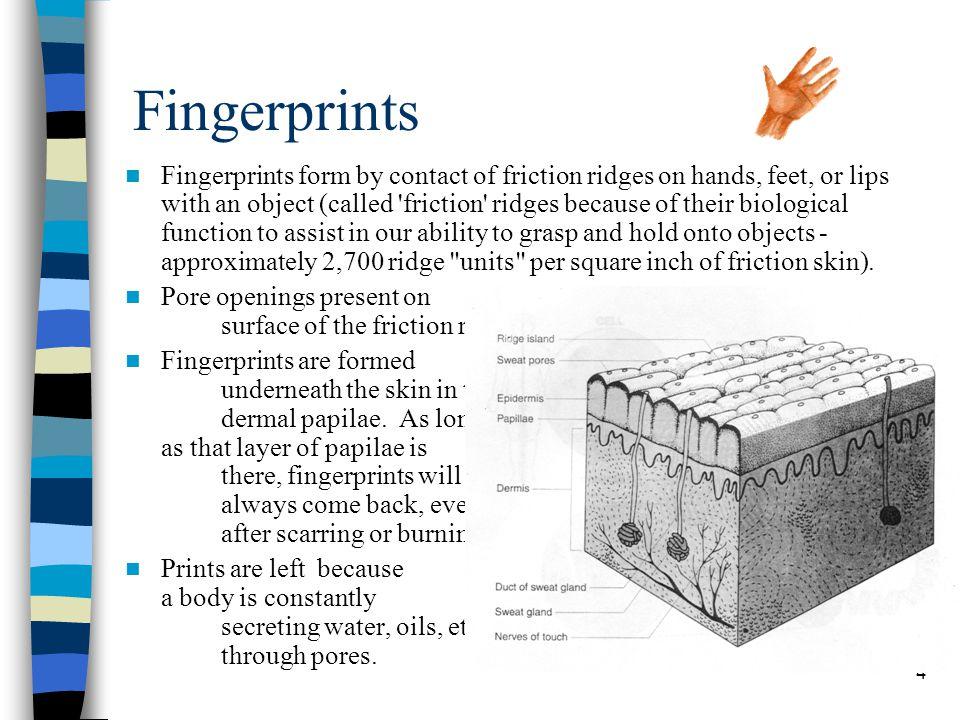 5 Forensic Fingerprints Your fingerprint patterns are hereditary.