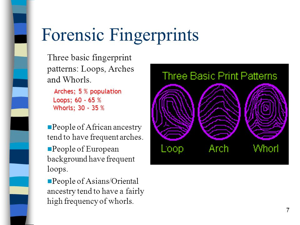 8 Fingerprints Within these patterns are minutia points - about thirty different types of minutiae points, and no two people have the same types of minutiae in the same number in the same places on their fingertips.
