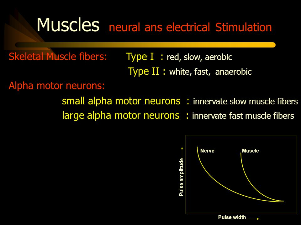 Muscles neural ans electrical Stimulation Muscle contraction mechanisms: recruitment : activation of an increasing number of motor units within a muscle on contraction temporal summation : increasing firing rate of active motor units During voluntary activation, recruitment and temporal summation are two mechanisms that regulate the strenght of muscle contraction, and usually these mechanisms act simultaneously
