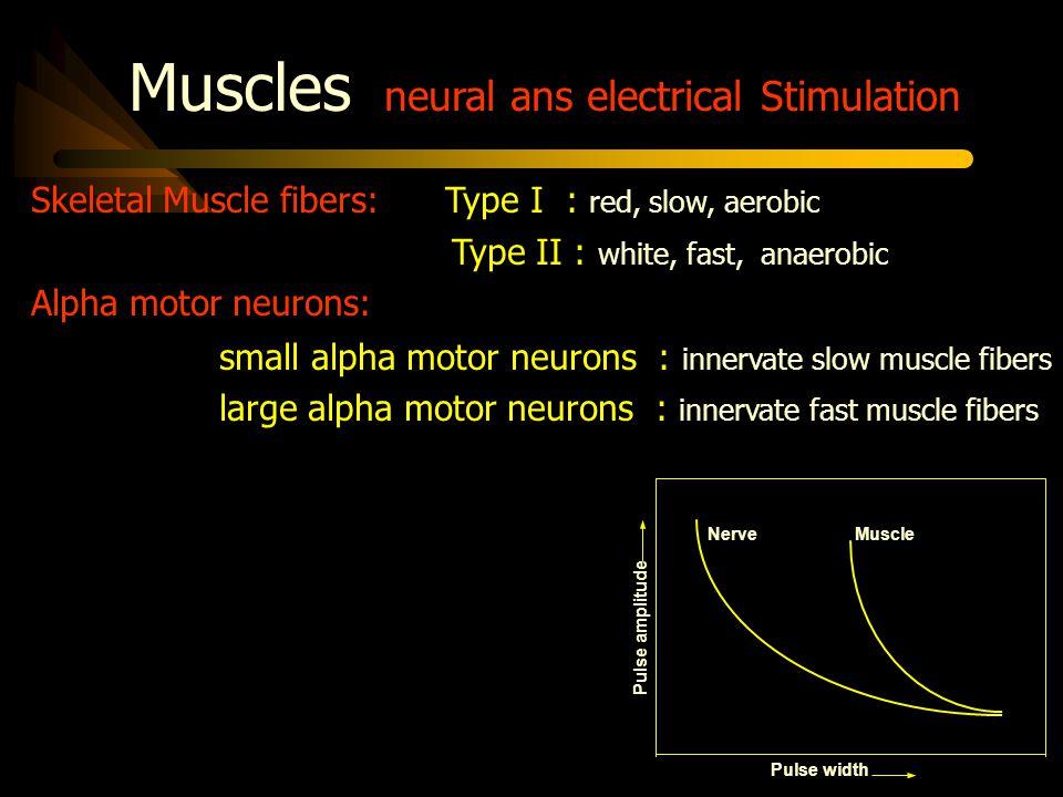 Excitation of Myelinated Nerve