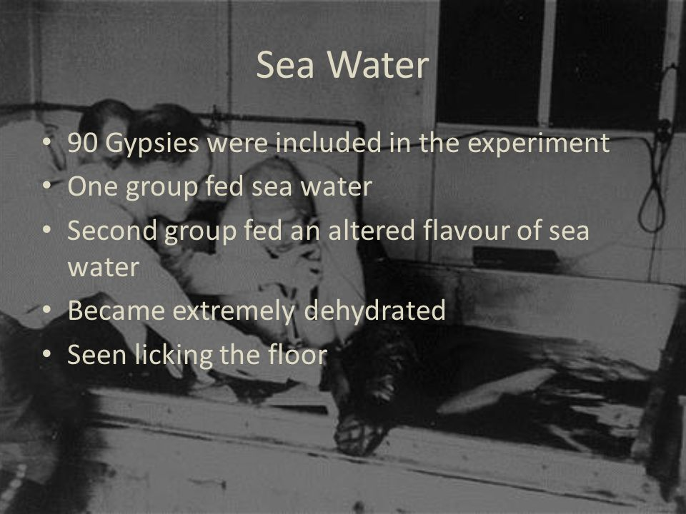Sea Water 90 Gypsies were included in the experiment One group fed sea water Second group fed an altered flavour of sea water Became extremely dehydrated Seen licking the floor