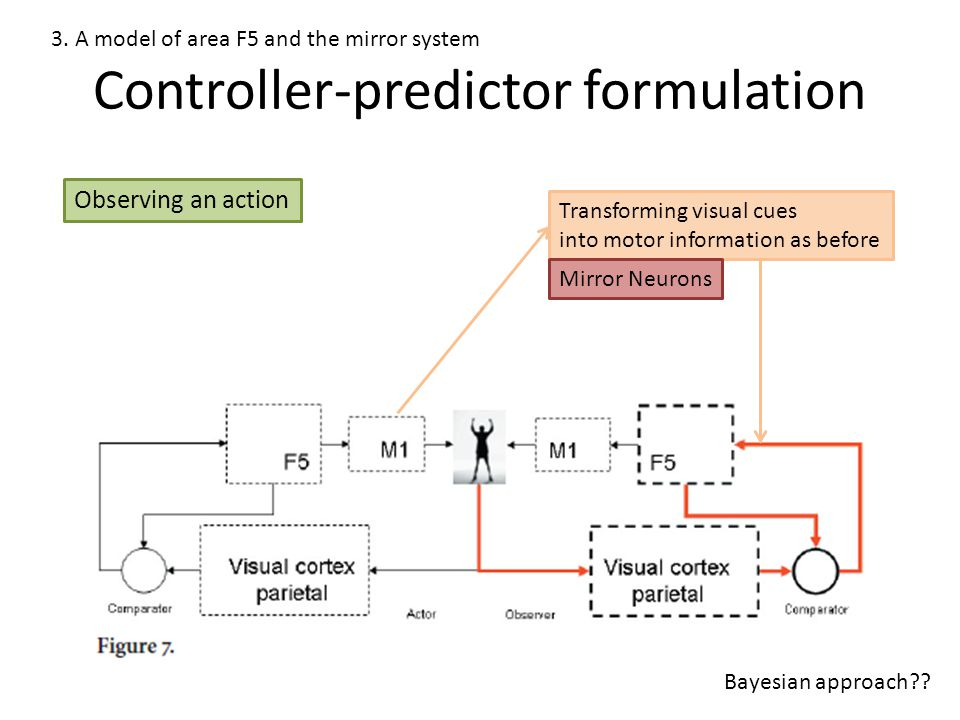 Controller-predictor formulation 3. A model of area F5 and the mirror system Observing an action Transforming visual cues into motor information as be