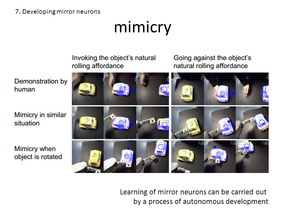 mimicry 7. Developing mirror neurons Learning of mirror neurons can be carried out by a process of autonomous development