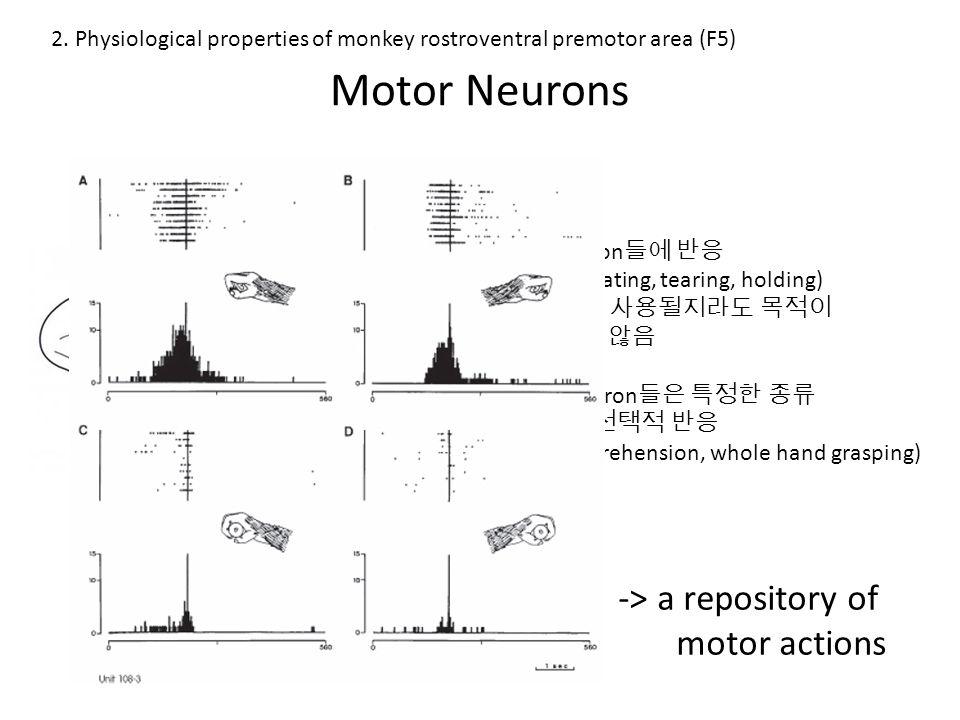 Visuomotor Neurons - Canonical Neurons 움직임이 있기 전에, 움직일 수 있는 대상을 보았을 때에도 발화 많은 canonical neurons 들은 하나, 혹은 소수의 대상에 선택적으로 반응한다.