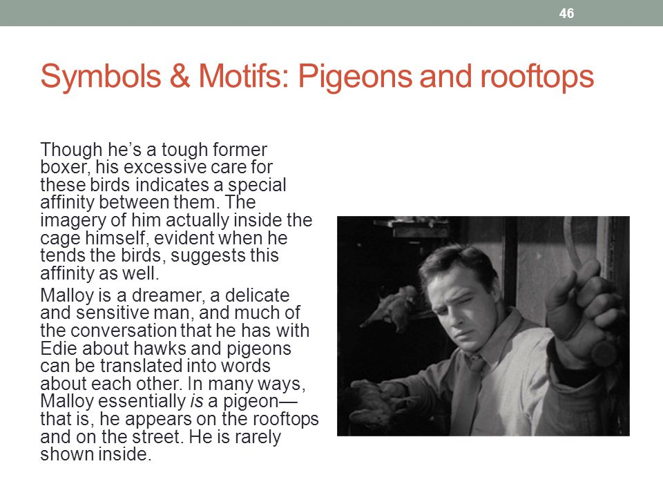 Symbols & Motifs: Pigeons and rooftops Though he's a tough former boxer, his excessive care for these birds indicates a special affinity between them.