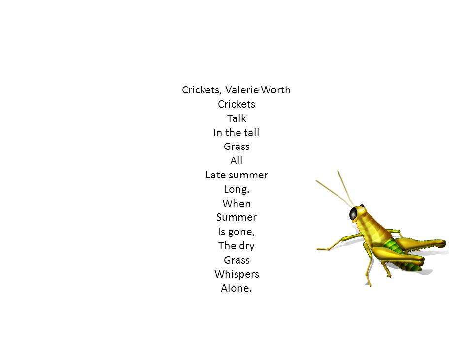 Crickets, Valerie Worth Crickets Talk In the tall Grass All Late summer Long. When Summer Is gone, The dry Grass Whispers Alone.