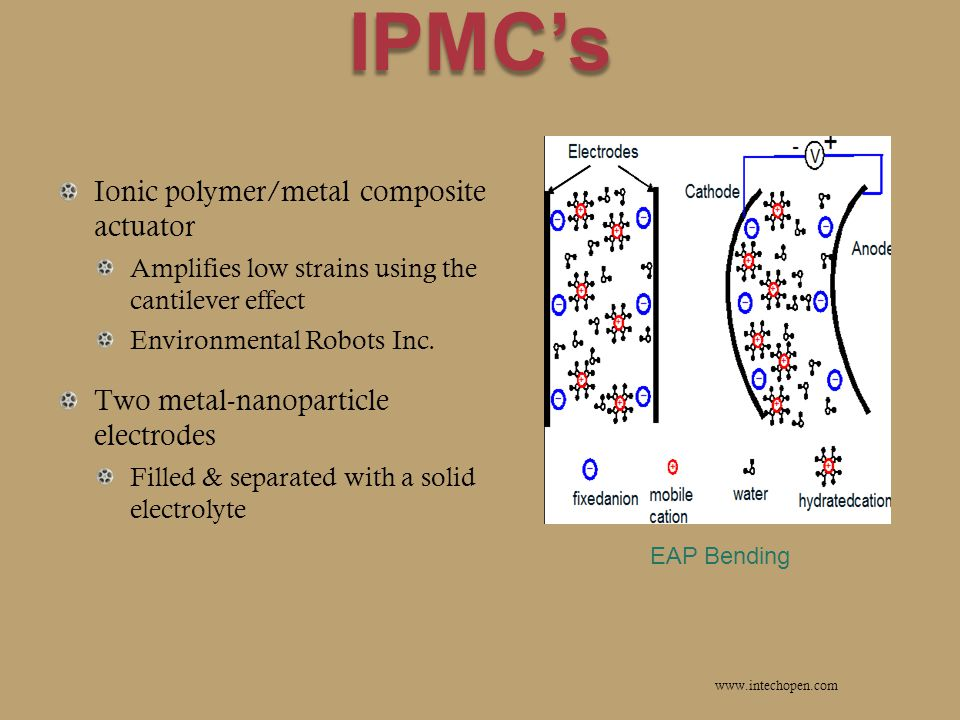 IPMC's Ionic polymer/metal composite actuator Amplifies low strains using the cantilever effect Environmental Robots Inc.