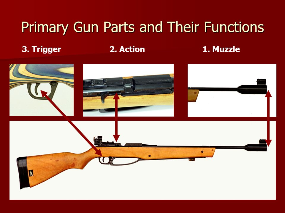 Primary Gun Parts and Their Functions 3. Trigger2. Action1. Muzzle