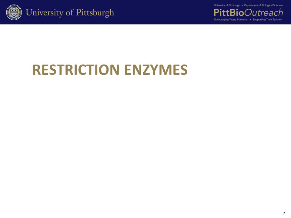 Each restriction enzyme cuts DNA wherever its recognition site appears.
