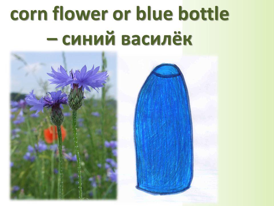 corn flower or blue bottle – синий василёк