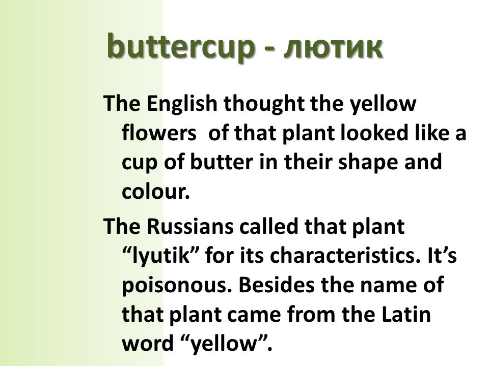 The English thought the yellow flowers of that plant looked like a cup of butter in their shape and colour.