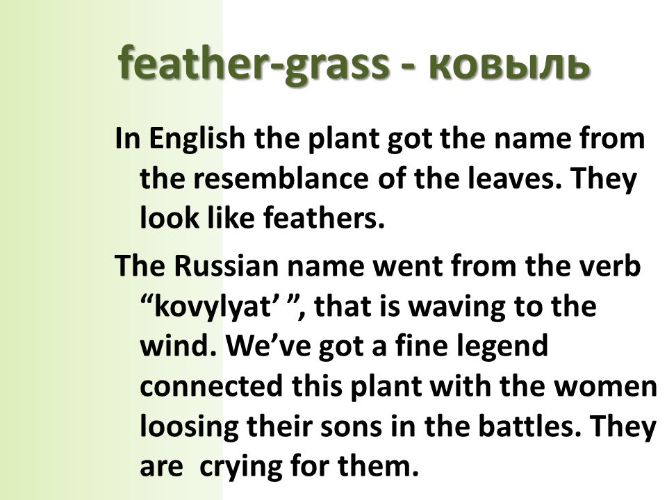 In English the plant got the name from the resemblance of the leaves.