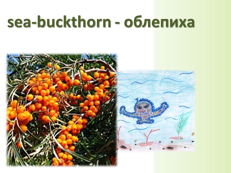 sea-buckthorn - облепиха