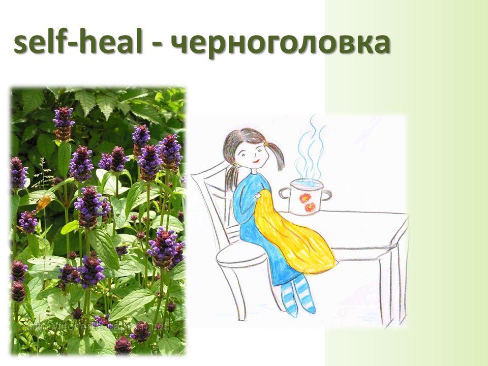 self-heal - черноголовка