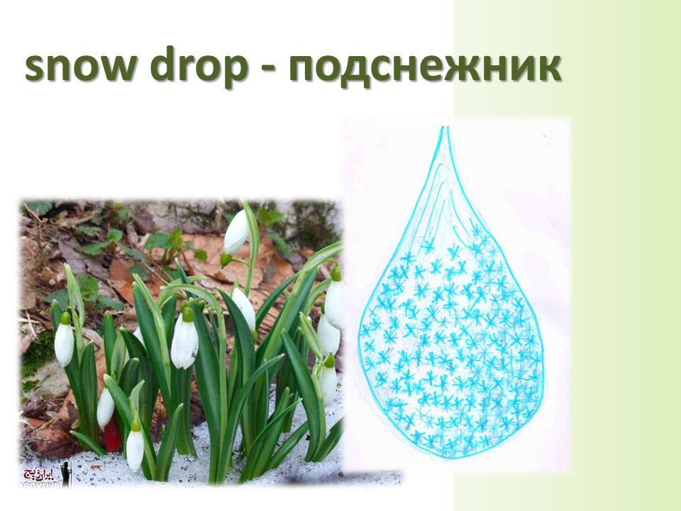 snow drop - подснежник