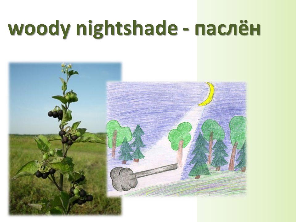 woody nightshade - паслён