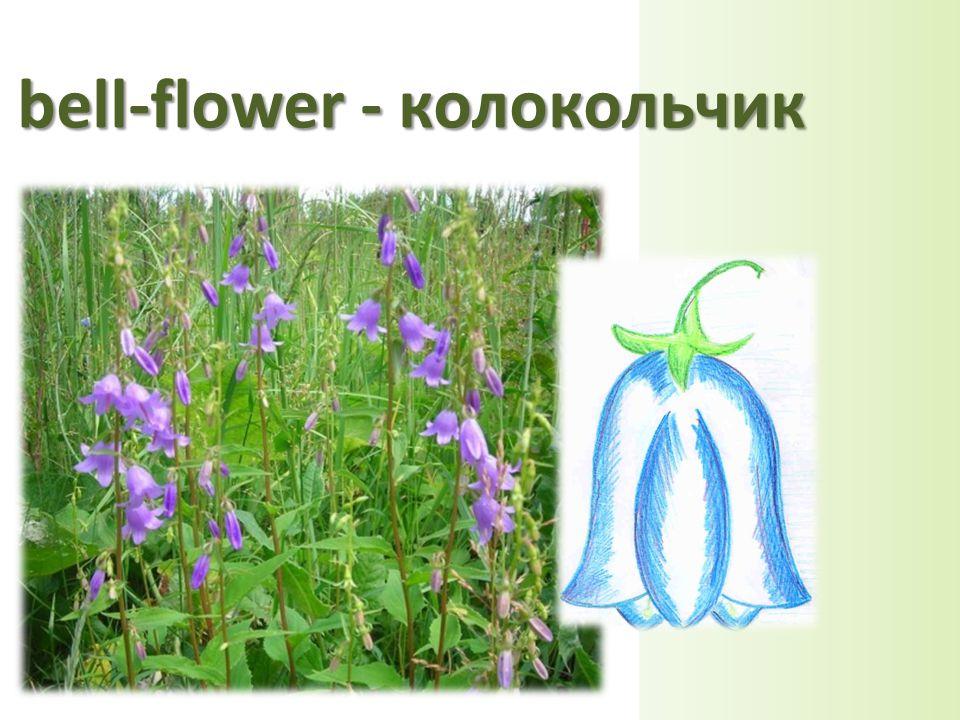 bell-flower - колокольчик