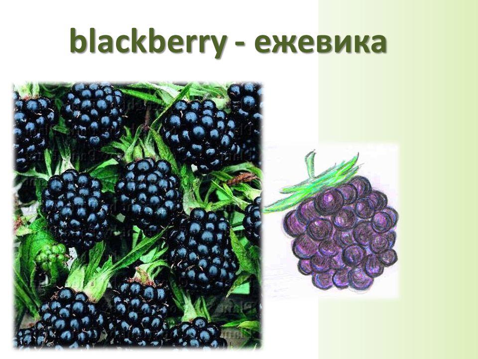 blackberry - ежевика