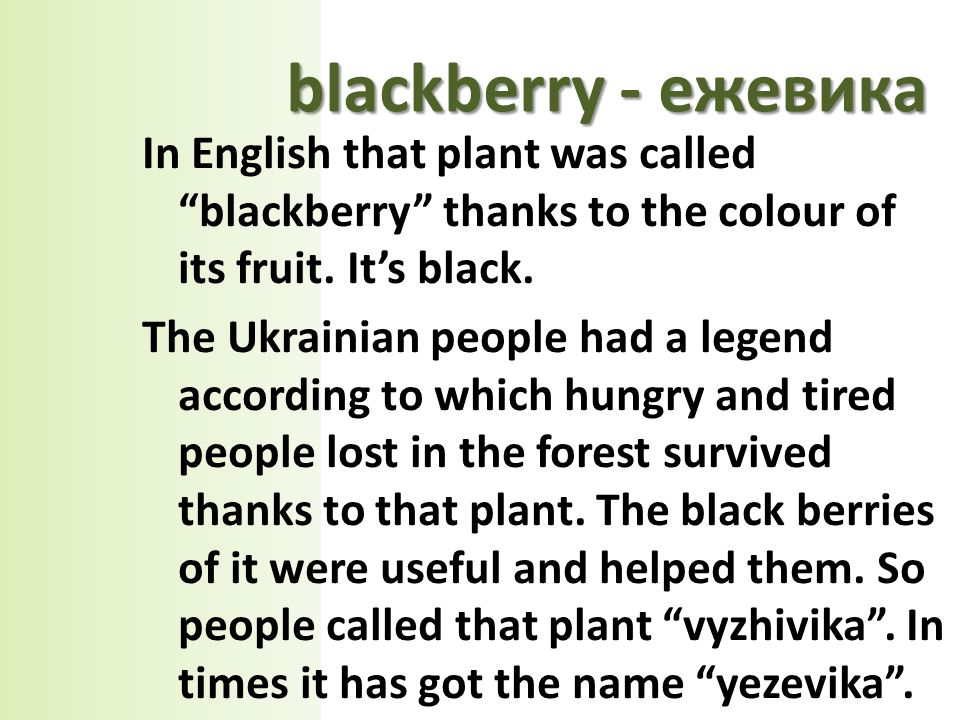 In English that plant was called blackberry thanks to the colour of its fruit.