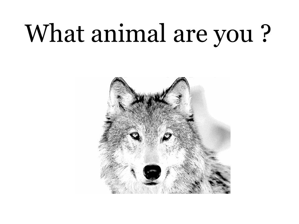 What animal are you ?