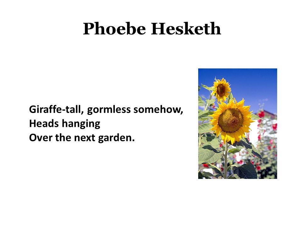 Phoebe Hesketh Giraffe-tall, gormless somehow, Heads hanging Over the next garden.