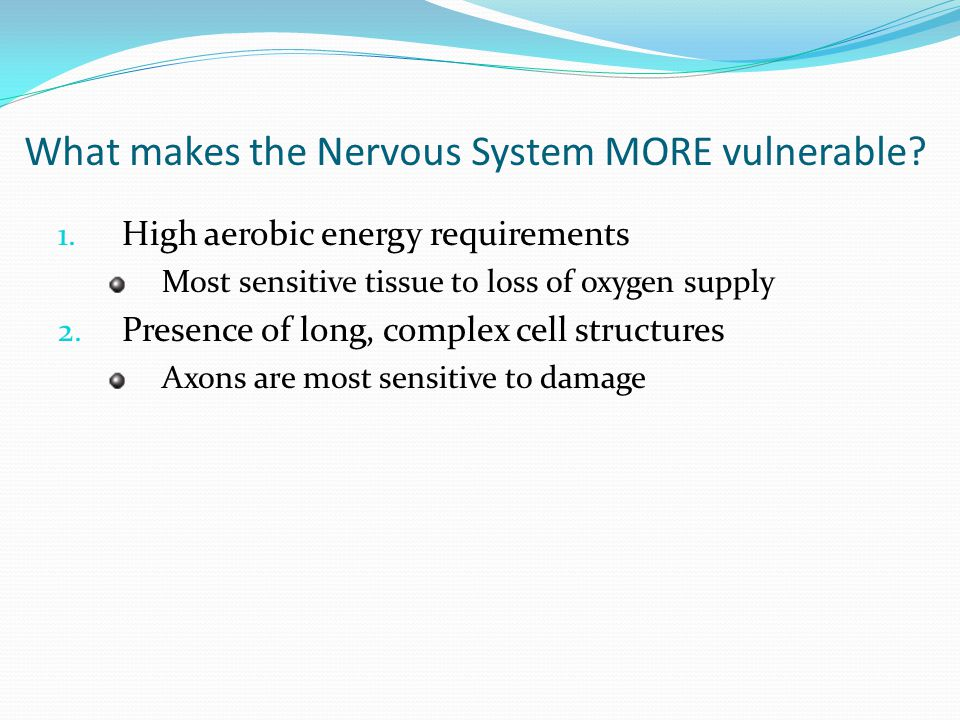 What makes the Nervous System MORE vulnerable.1.