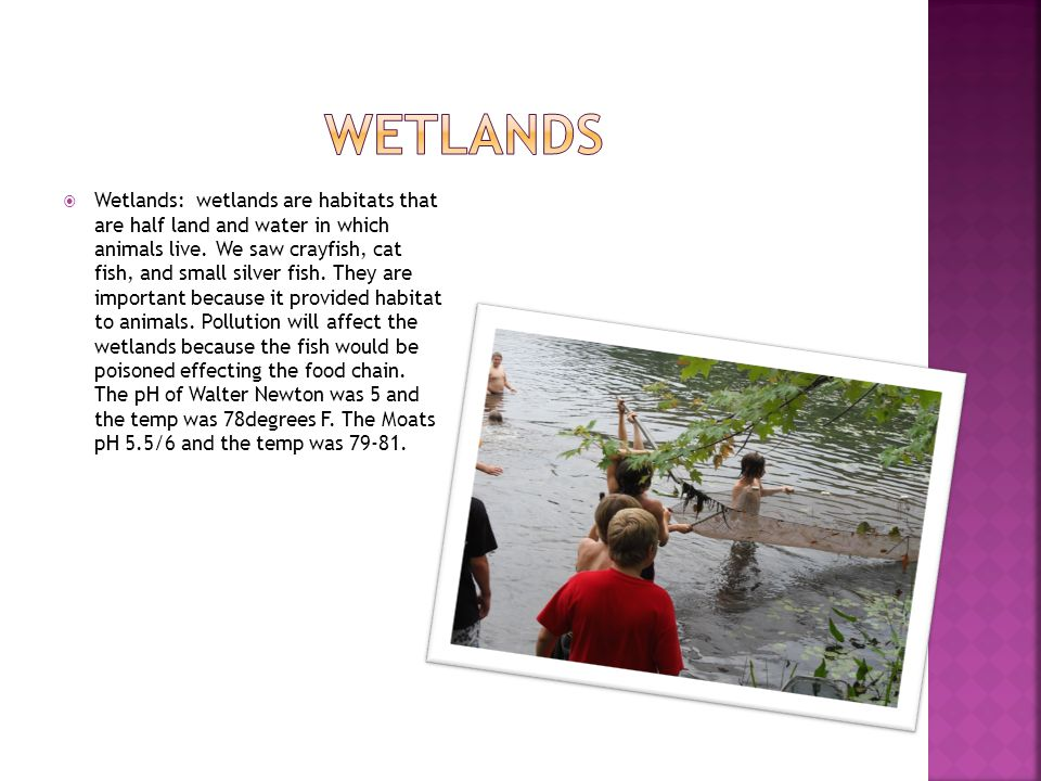  Wetlands: wetlands are habitats that are half land and water in which animals live. We saw crayfish, cat fish, and small silver fish. They are impor
