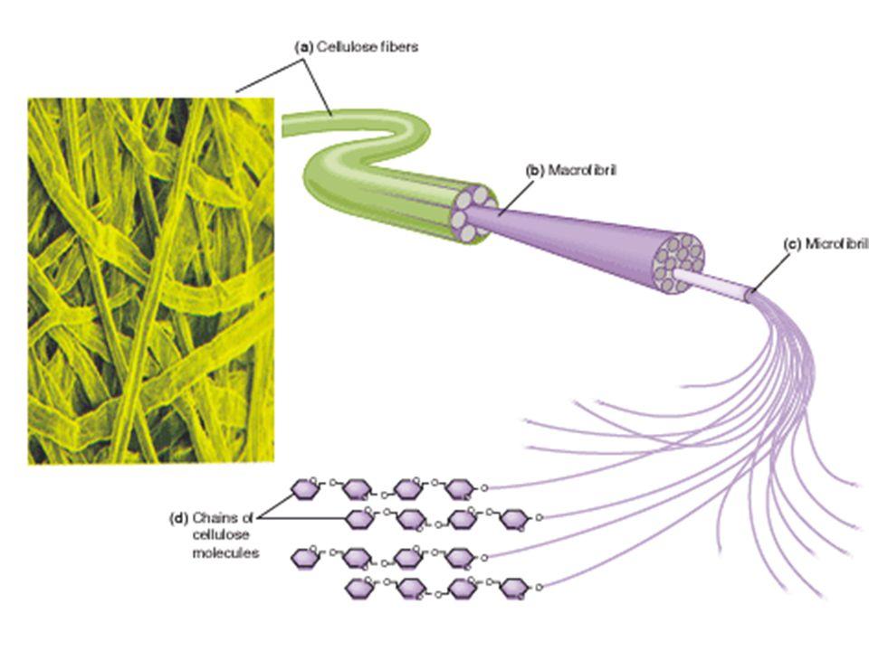 http://nutrition.jbpub.com/resources/images/i mages/fiber.gif