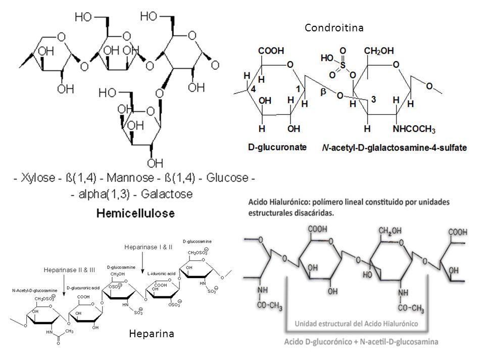http://upload.wikimedia.o rg/wikipedia/commons/6/ 69/Hemicellulose.png http://www.rodriguezpalacios.co m.ar/estetica/img/acido- hialuronico.jpg Condroitina Heparina