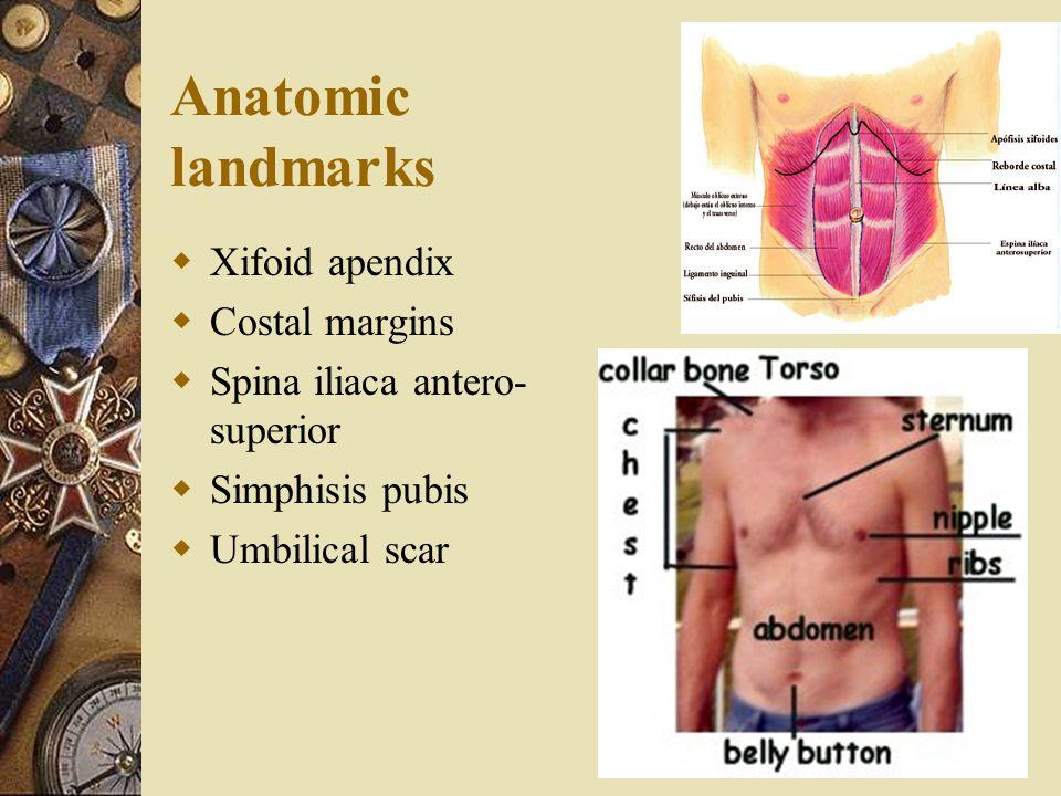 Anatomic landmarks  Xifoid apendix  Costal margins  Spina iliaca antero- superior  Simphisis pubis  Umbilical scar