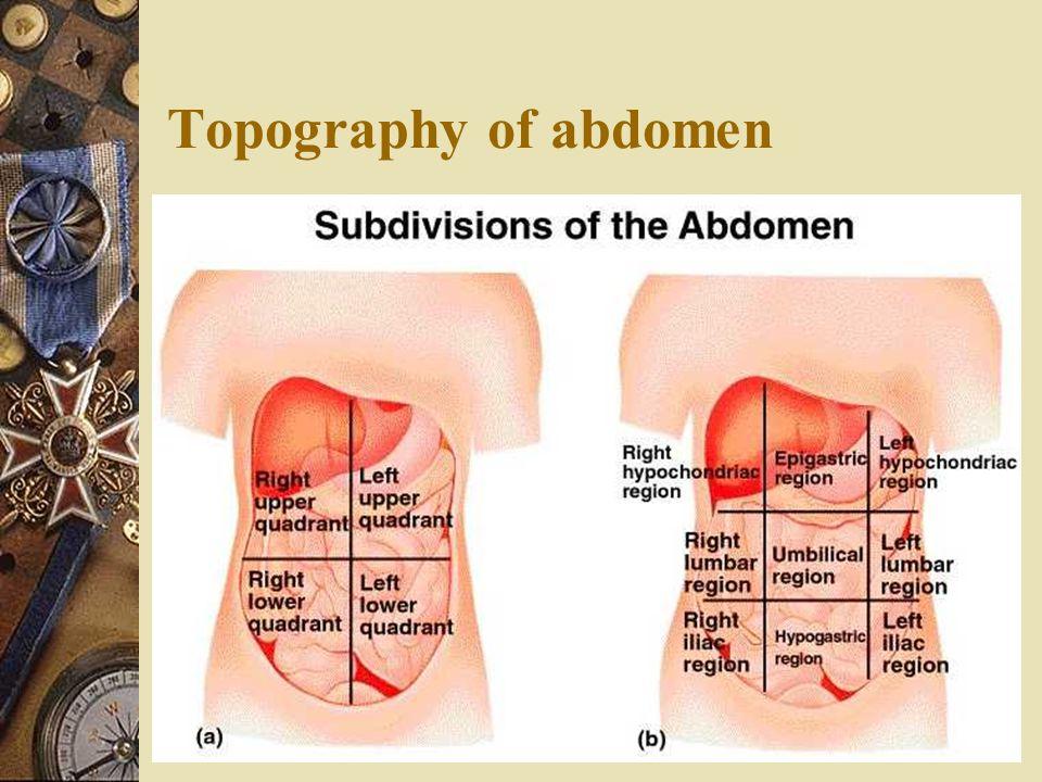 Topography of abdomen