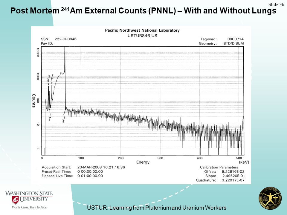 Slide 36 USTUR: Learning from Plutonium and Uranium Workers Post Mortem 241 Am External Counts (PNNL) – With and Without Lungs