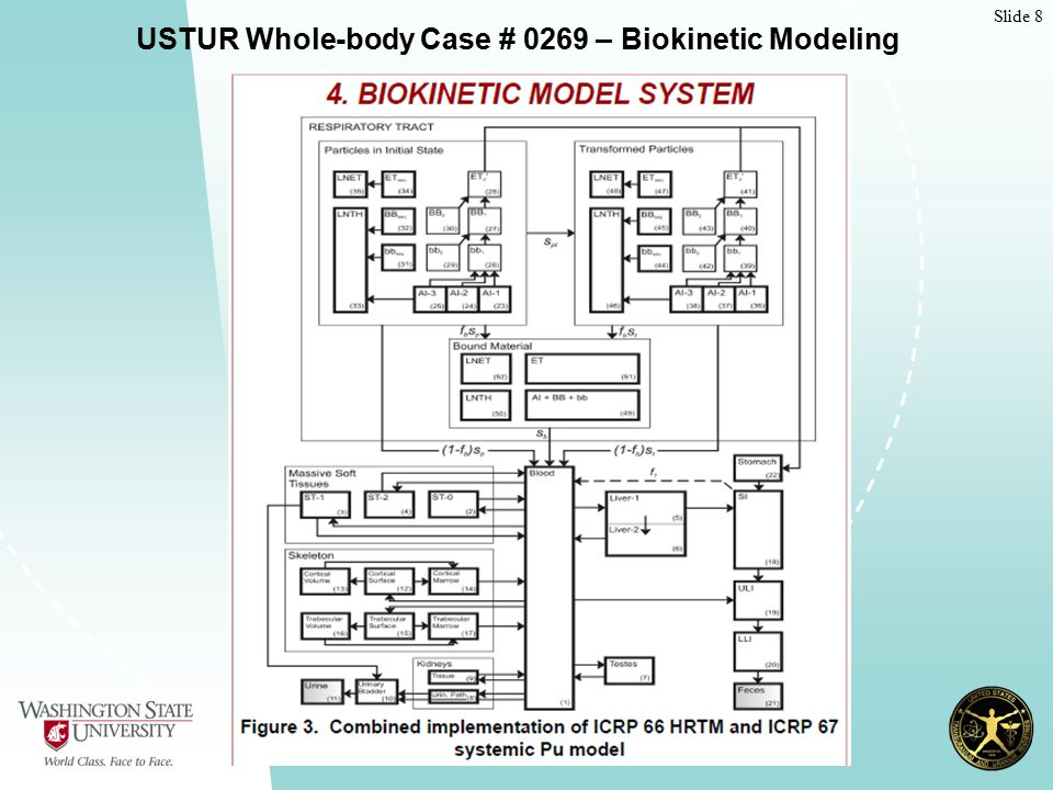 Slide 8 USTUR Whole-body Case # 0269 – Biokinetic Modeling