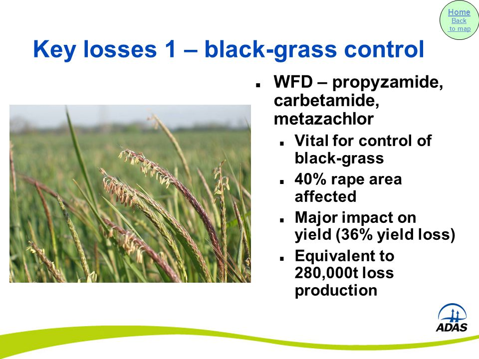 Key losses 1 – black-grass control WFD – propyzamide, carbetamide, metazachlor Vital for control of black-grass 40% rape area affected Major impact on yield (36% yield loss) Equivalent to 280,000t loss production Home Back to map