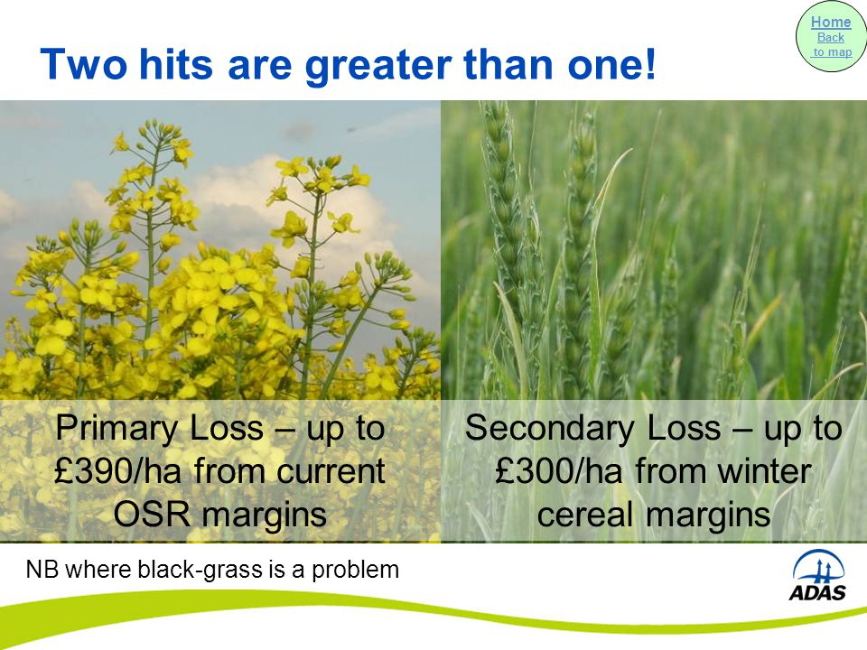 Secondary Loss – up to £300/ha from winter cereal margins Two hits are greater than one.
