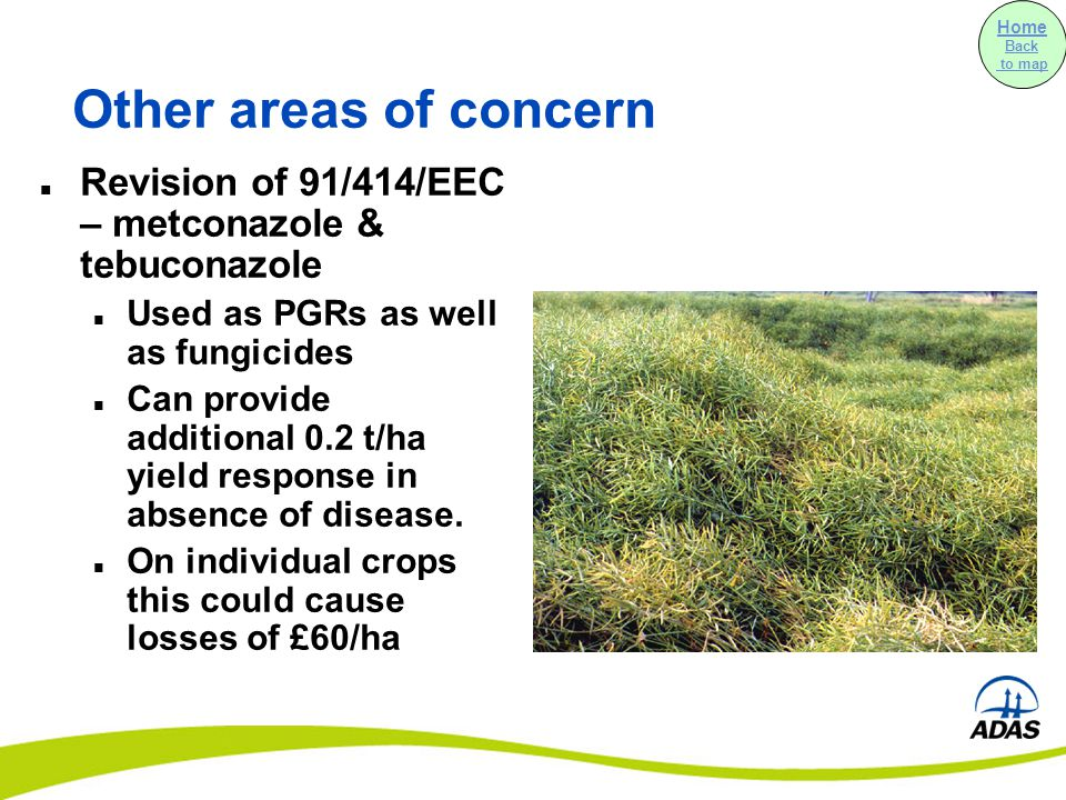 Other areas of concern Revision of 91/414/EEC – metconazole & tebuconazole Used as PGRs as well as fungicides Can provide additional 0.2 t/ha yield response in absence of disease.