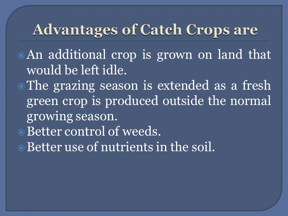  An additional crop is grown on land that would be left idle.