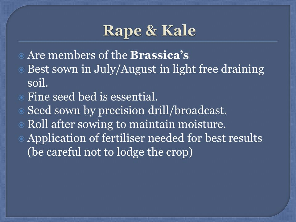  Are members of the Brassica's  Best sown in July/August in light free draining soil.