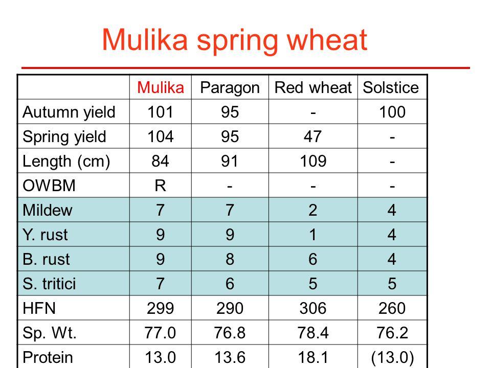 Mulika spring wheat MulikaParagonRed wheatSolstice Autumn yield10195-100 Spring yield1049547- Length (cm)8491109- OWBMR--- Mildew7724 Y.
