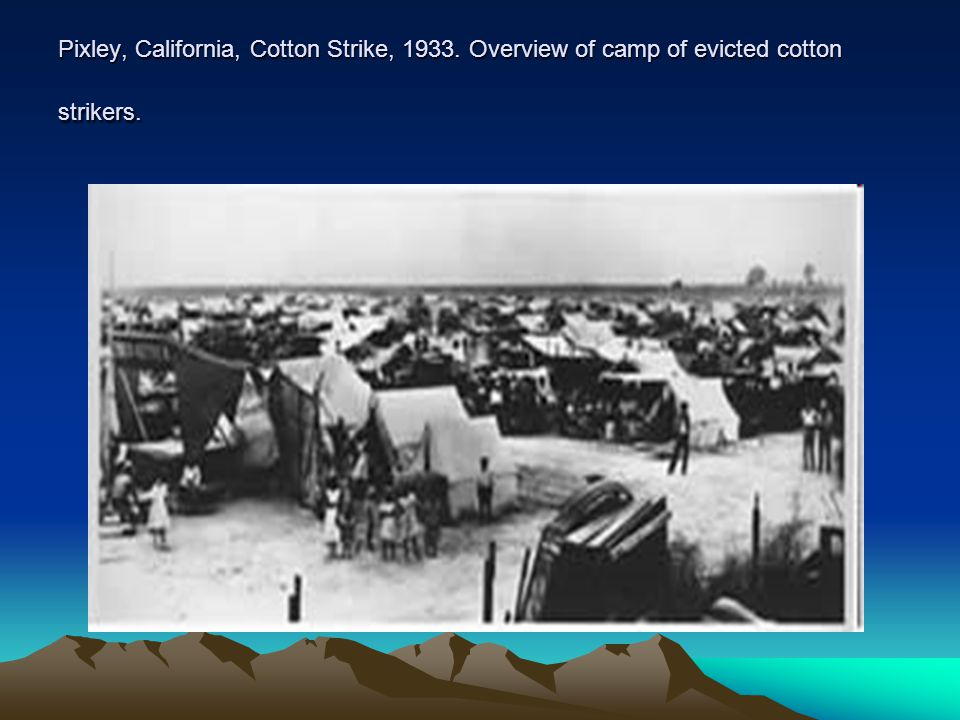 Pixley, California, Cotton Strike, 1933. Overview of camp of evicted cotton strikers.