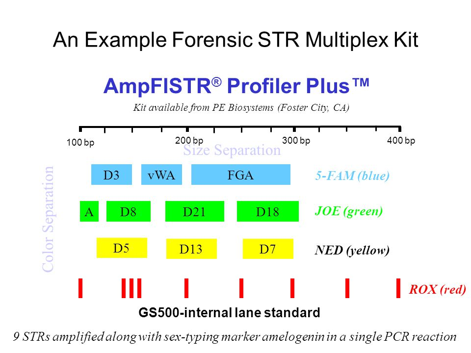 An Example Forensic STR Multiplex Kit D3FGAvWA 5-FAM (blue) D13 D5 D7 NED (yellow) AD8D21D18 JOE (green) GS500-internal lane standard ROX (red) AmpFlSTR ® Profiler Plus™ Kit available from PE Biosystems (Foster City, CA) 9 STRs amplified along with sex-typing marker amelogenin in a single PCR reaction 100 bp 400 bp300 bp200 bp Size Separation Color Separation