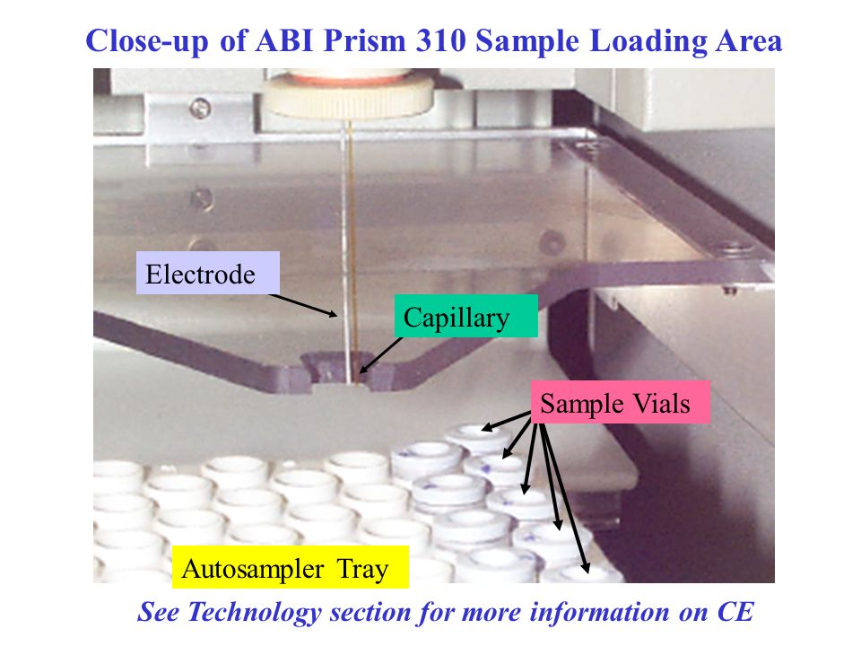 Close-up of ABI Prism 310 Sample Loading Area Autosampler Tray Sample Vials Electrode Capillary See Technology section for more information on CE