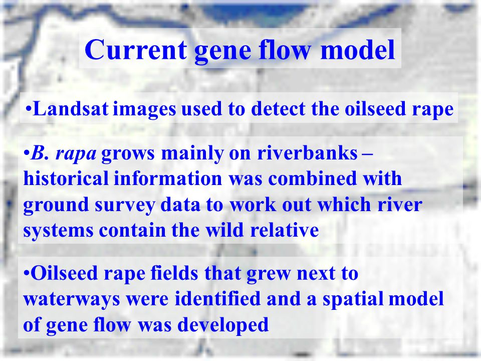 Current gene flow model Landsat images used to detect the oilseed rape B. rapa grows mainly on riverbanks – historical information was combined with g